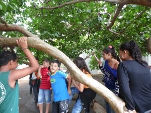 As crianças adoram a goiabeira!!!